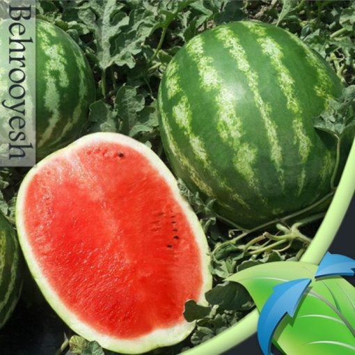 بذر هندوانه یامی