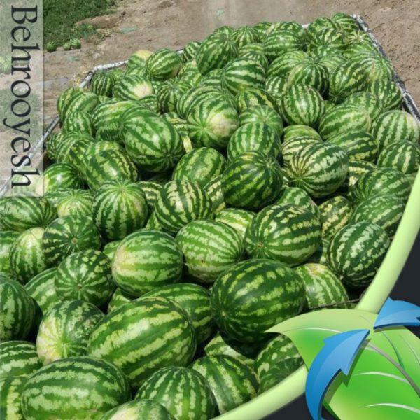بذر هندوانه استاندارد کریمسون سوئیت رین سید