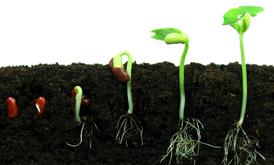 محرک رشد و ضد تنش