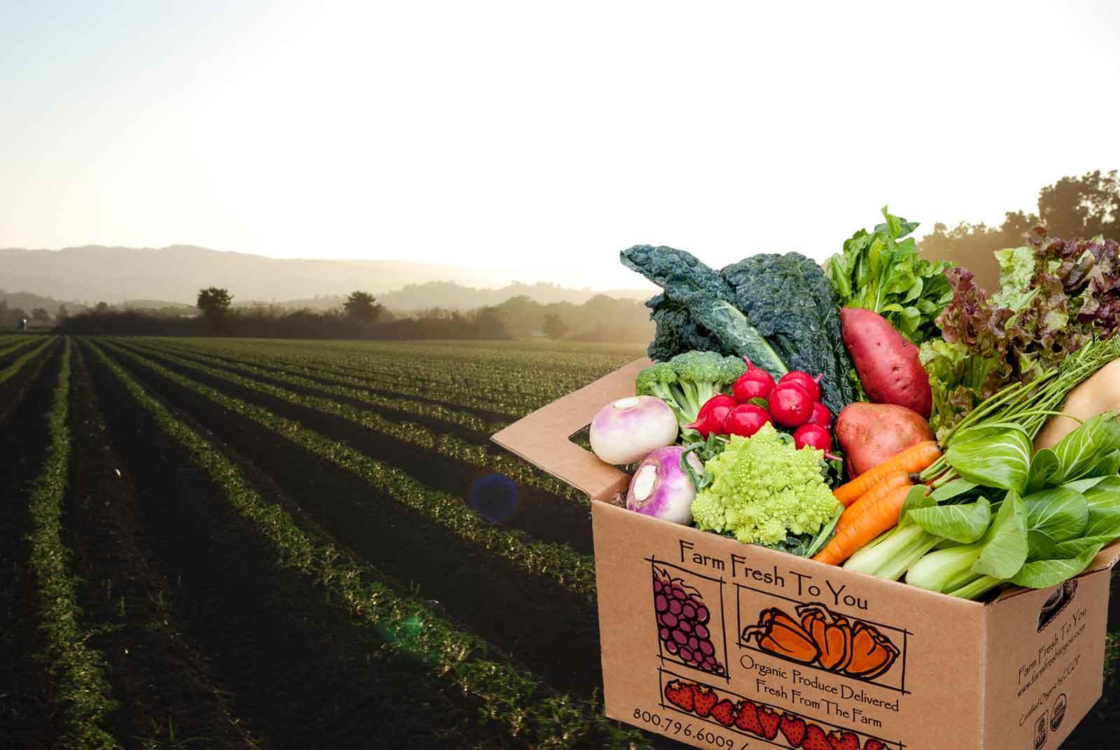 بازار کشاورزی-خرید محصولات کشاورزی
