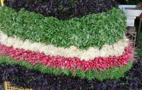 کاشت سبزی در آپارتمان – کاشت سبزی خوردن – کاشت سبزی در سبد – کاشت سبزی در گلدان - شیوه های کاشت سبزی در آپارتمان و خانه - خرید انواع بذر سبزی خوردن با کیفیت - خرید آنلاین انواع بذر سبزی خورد مرغوب