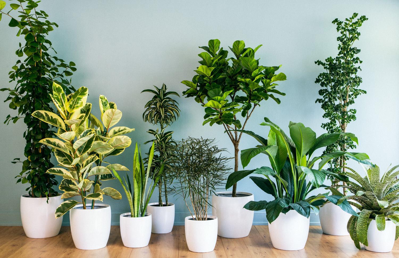 انواع گیاهان آپارتماانی