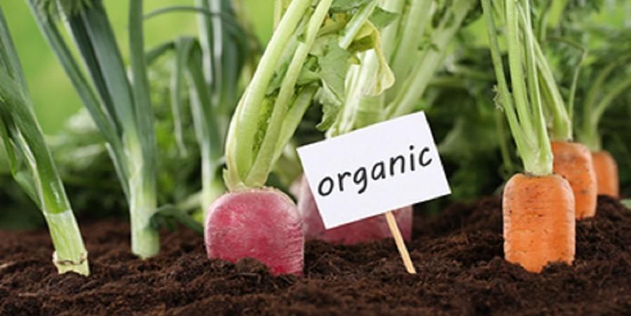 تولید محصول ارگانیک