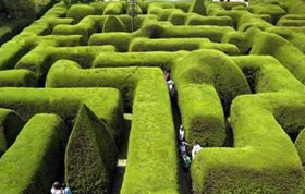 از درختچه مقاوم به سرما شمشاد به عنوان طراحی های فضای سبز و همچنین پرچین استفاده می شود. درختچه مقاوم به سرما شمشاد درختچه ی همیشه سبزی ست که توسط باران تغذیه می شود..درختچه مقاوم به سرما خرزهره - درختچه مقاوم به سرما برگ نو - درختچه مقاوم به سرما زرشک زینتی