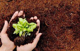 ظرفيت نگهدارى بالاى آب سبك بودن و داشتن مواد آلى فراوان عدم هر گونه آلودگى و آفت خصوصيات فيزيكى مناسب حاصلخيزى خاك باغبانى - خاك مناسب باغبانى - خاك چمن - پوكه صنعتى - پرليت