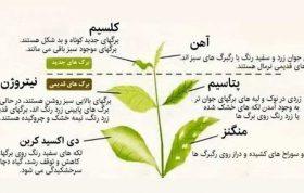 عناصر اولیه ی پر مصرف گیاه جهت تکامل سیکل زندگی گیاه لازم است، همچنین عناصر اولیه ی پر مصرف گیاه نقش مستقیم در تغذیه گیاه داشته، نقش ضروری عناصر اولیه ی پر مصرف گیاه در تغذیه گیاه خاص و ویژه است