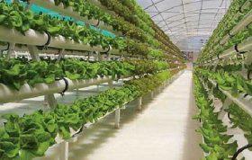 از مهم ترین محیط رشد طبیعی گیاهان، خاک بوده که علاوه بر سرپا نگه داشتن گیاه، هوا و آب و مواد غذایی را برای گیاه تأمین می کند. انواع سیستم های کشت گلخانه ای - روش جدید کشت گلخانه ای - انواع بستر های کشت در گلخانه