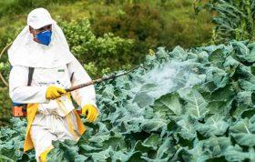 توجه به میزان استراحت مناسب کشاورزان توجه به شرایط آب و هوایی مزرعه توجه به ناراحتی های روحی ناشی از کار در مزرعه توجه به بیماری های زمینه ای هر کدام از کشاورزان توجه به شرایط سنی کشاورزان مسائل ایمنی برای شروع کار کشاورزی - اصول ایمنی در کشاورزی - ایمنی کار کشاورزی