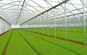 تأمین رطوبت گلخانه -تهویه گلخانه - شرکت بهرویش | فروشگاه انلاین کشاورزی