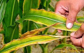 فرسودگی خاک به علت كشت های پی در پی و متوالی به وجود می آید. از جمله عوامل مهم، گرسنگی های نامرئی است که خاک فاقد يک يا چند عنصر معدنی شده و گياهی كه در آن رشد می کند، گرسنه ی آن عناصر خواهد شد. گرسنگی خاک کشاورزی - مواد معدنی خاک - غنی سازی خاک کشاورزی ایران