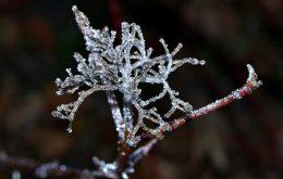 محافظت گیاهان در برابر سرمازدگی - جلوگیری از سرمازدگی درختان میوه - روش های مقابله با سرمازدگی باغات - عوامل موثر در جلوگیری از سرما زدگی گیاهان