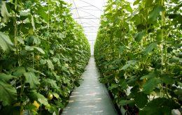 نکات مهم در انتخاب محل گلخانه - انتخاب محل احداث گلخانه - بهتربن مکان برای احداث گلخانه