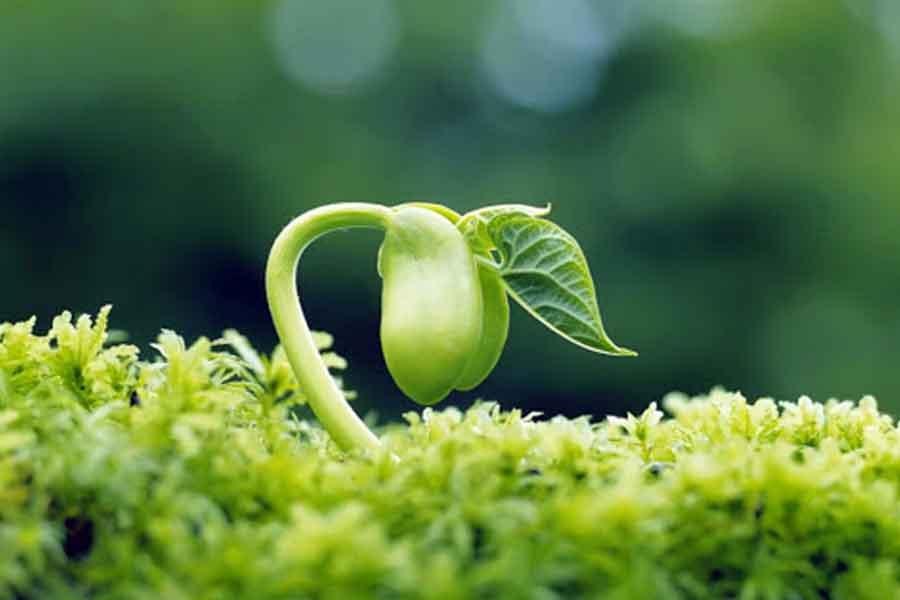 با استفاده از این مقاله میتوانید در مورد حاصلخیزی خاک و اجزای آن ، مدیریت حاصلخیزی خاک و همچنین حاصلخیزی خاک های زراعی اطلاعات مفیدی کسب کنید.