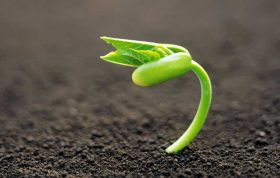 در این مقاله با مواردی آشنا می شوید که میتوانند به کشاورزی سالم تر کمک شایانی کنند این موارد عبارتند از : باکتری های محرک رشد ریشه ، کودهای زیستی باکتریایی ، پرکاربرد ترین کودهای زیستی