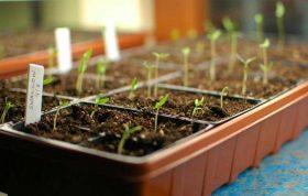 در این محتوا سعی داریم در مورد بستر کشت بذر ، خاک مناسب بستر بذر و همچنین انواع بستر های کشت بذر صحبت کنیم امیدواریم که این اطلاعات برای شما مفید باشد.