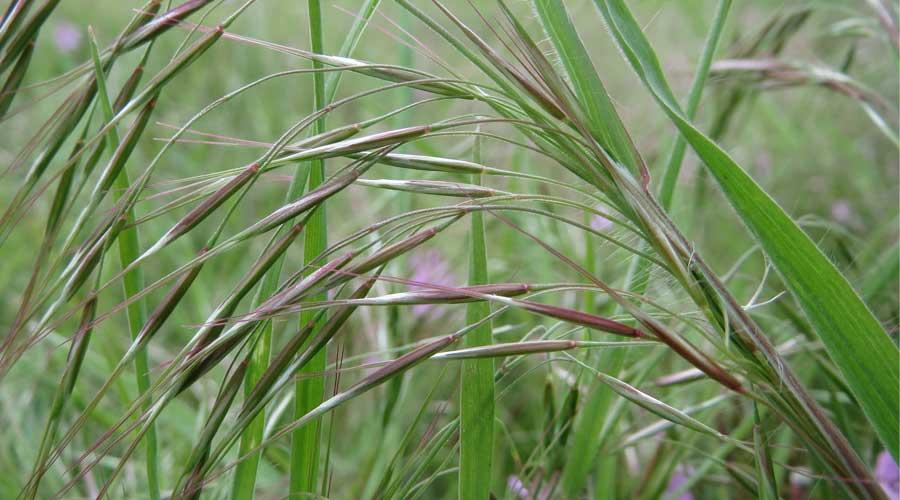 در این محتوا ما به مبارزه ی مکانیکی با علف های هرز ، از بین بردن علف های هرز بدون آسیب به گیاهان و مبارزه ی بیولوژیکی با علف های هرز آموزش هایی می دهد که میتوان با رعایت کردن نکات گیاهی شاداب داشته باشیم.