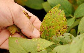 در این محتوا مهمترین عوامل بیماری زا در گیاهان و همچنین علائم بیماری گیاهان را برایتان شرح میدهیم که با توجه به آن میتوانید گیاهی با نشاط تر و سالم تر پرورش دهید.