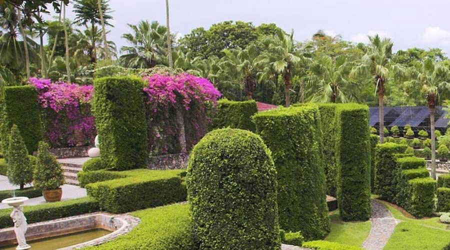 در این مقاله موضوعاتی چون : گیاهان مقاوم فضای سبز و گیاهان همیشه مقاوم و گیاهان مناسب فضای باز - گیاهان محوطه و فضای سبز با یکدیگر صحبت میکنیم.