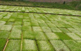 در این مقاله شما را با انواع خزانه برنج ، آماده سازی زمین خزانه برنج ، آماده سازی بذر برنج و مکان و زمان خزانه گیری آشنا می کنیم.