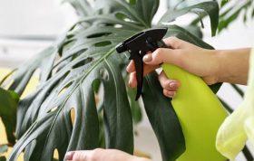 این مقاله در مورد سموم خانگی و سم های پر کاربرد خانگی صحبت می کند شما برای مبارزه با آفات گیاهان منزلتان میتوانید از این محتوا بسیار استفاده کرده و آنها را از میان بردارید.