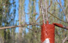 اگر به داشتن اطلاعاتی در مورد درخت گردو و سرشاخه کاری علاقه مند هستید و همچنین پاسخ سوال سرشاخه کاری چیست؟ را نمیدانید این محتوا میتواند برای شما بسیار پرکاربرد باشد.