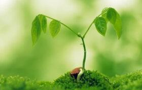 در این محتوا به یکی از مهمترین مسائل در مورد گیاهان یعنی گرمازدگی ، تائید تنش گرما بر جوانه زنی و همچنین تنش گرما پرداخته می شود.
