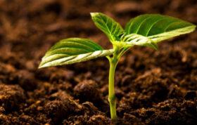 این محتوا در مورد انواع هورمون گیاهی ، نقش هورمون گیاهی و همچنین کاربرد هورمون گیاهی صحبت می کند که شما می توانید از اطلاعات آن به نحو احسنت استفاه کنید.