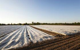 در این محتوا می توانید اطلاعات بسیار مفیدی در مورد آماده سازی خاک ، پوشاندن خاک و یکی از مباحث مهم در این محتوا یعنی فواید آفتابدهی خاک بدست آورید.