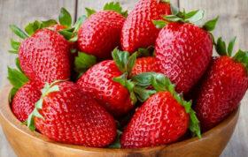 برای کاشت توت فرنگی ، دانستن اصول کاشت توت فرنگی از موارد پر اهمیت است. این گیاه ریشه های ظریف و سطحی آن باعث شده تا اصول کاشت توت فرنگی، از اولویت های مهم کشاورزان قرار بگیرد.