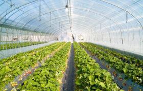 در این مقاله می خواهیم به طریقه استفاده از نور مصنوعی در گلخانه بپردازیم. با ما همراه باشید تا شما را با انواع سیستم های روشنایی گلخانه ها و روش های استفاده از سایه در گلخانه را برای شما مورد بررسی قرار دهیم.