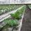 گرده افشانی گیاهان گلخانهای